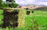 Качественное сено в тюках